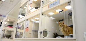 Where to find cats to adopt